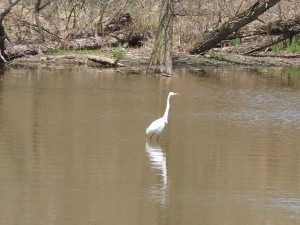 White Heron. Peace Valley
